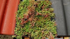 Groene dakpannen