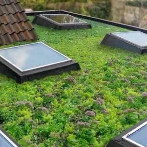 Begroeide daken