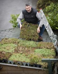 Een groen dak aanleggen
